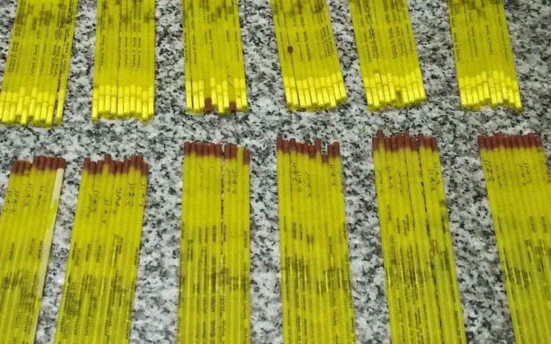 Detección de una partida importada de semen equino congelado infectado con Arteritis Viral Equina