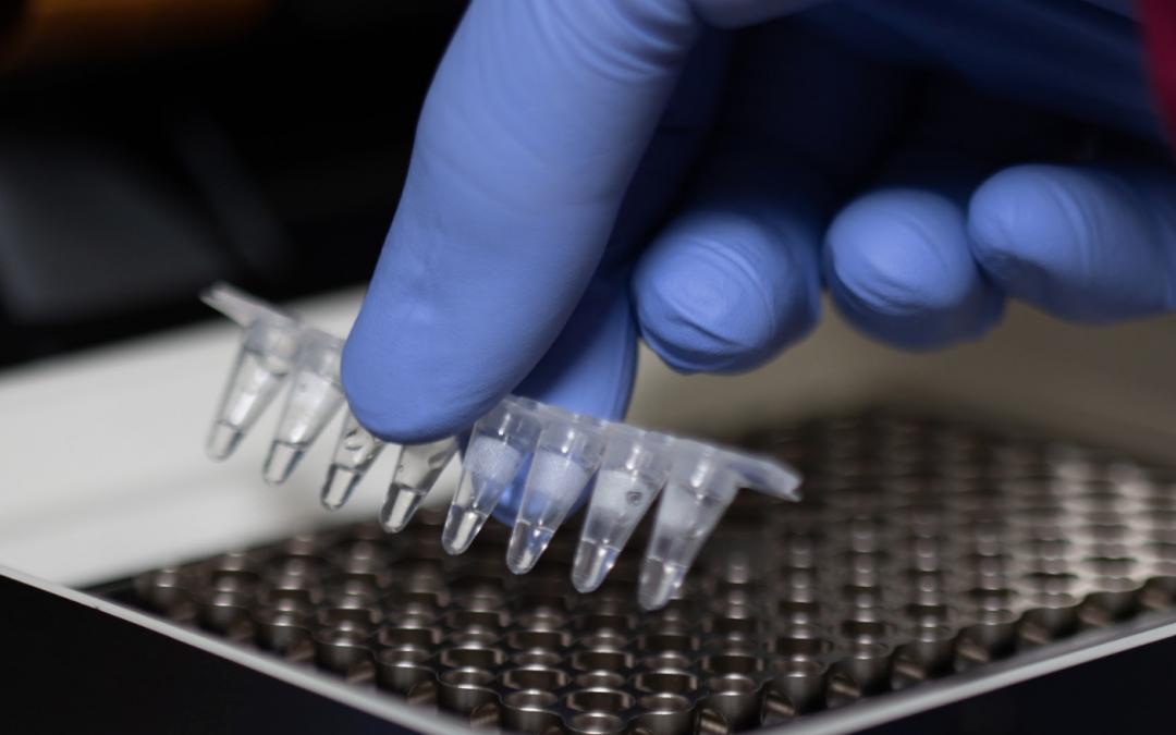 Aplicación de PCR real time para la detección de Tritrichomonas foetus y Campylobacter fetus