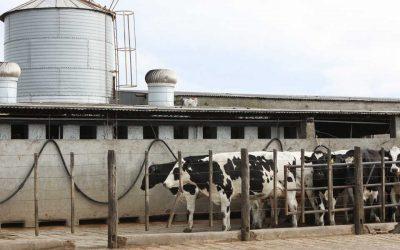 Convalidación del Programa de Tuberculosis bovina de Buenos Aires